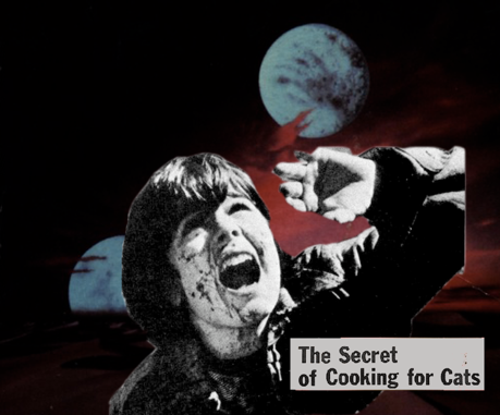 the secret cooking for cats